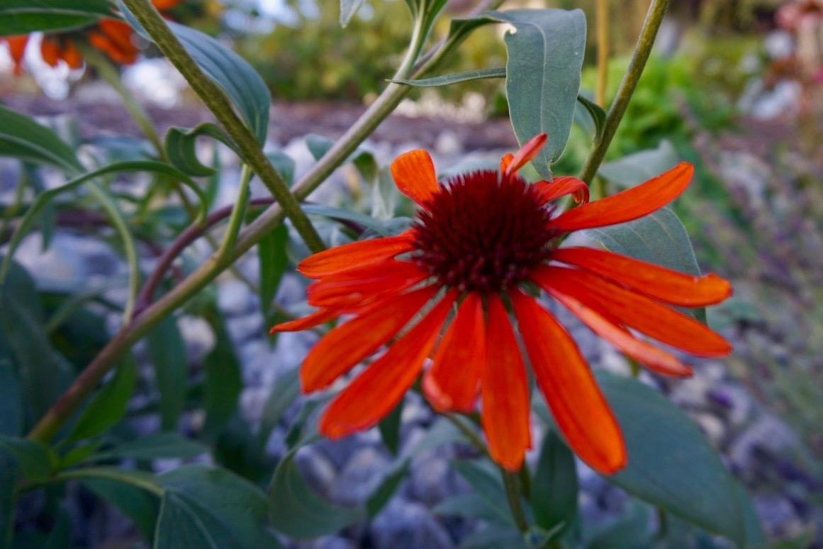 Zeitgemäße und pflegeleichte Vorgartengestaltung